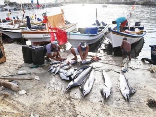 Día-del-pescador-e1457979602446-540x406